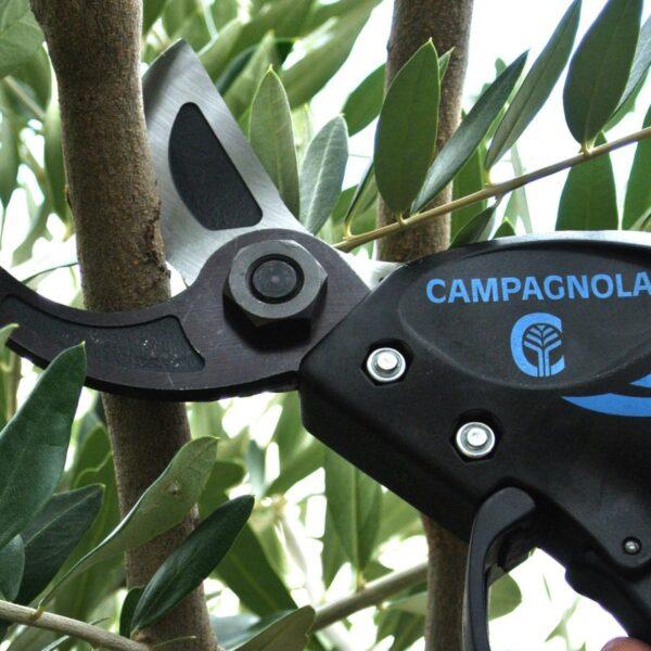 Campagnola Victory